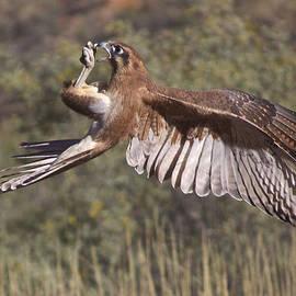 In Flight Meals, Alice Springs, Australia by Venetia Featherstone-Witty