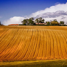 In the fields by Catherine Arnas