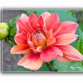 Mariarosa Rockefeller - In the Pink