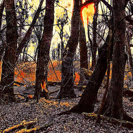 In The Prater Woods by Menega Sabidussi
