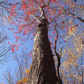 Robert Nickologianis - In The Woods 1