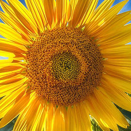 In Your Face Sunny by Sylvia J Zarco