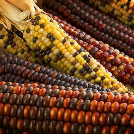 Indian Corn by Mark McKinney