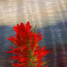Indian Paint Brush painted on wood  by Randall Branham