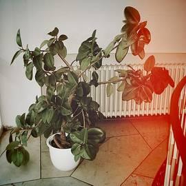 Indoor plant standing in the hallway