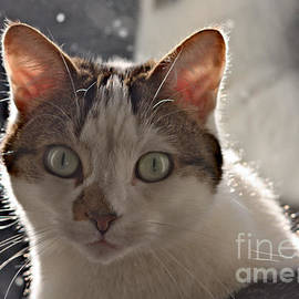 Inquisitive Cat by Jeremy Hayden