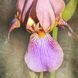 Iris Beauty by Karen Beasley