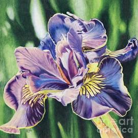 Iris by Rosellen Westerhoff