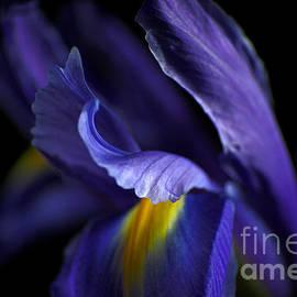 Wobblymol Davis - Iris