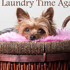 Purple Moon - Is it laundry time again?