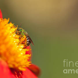 It is all about the Buzz by Beve Brown-Clark Photography
