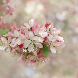 It's Blossom Time by Kim Hojnacki