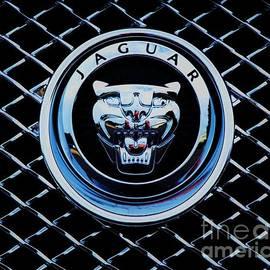 Marcus Dagan - Jaguar Logo And Grille
