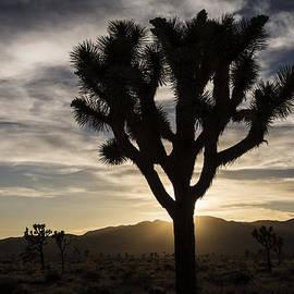 Lee Kirchhevel - Joshua Tree Sunset Silhouette 4