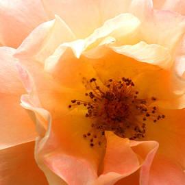 The Art Of Marilyn Ridoutt-Greene - Joyful