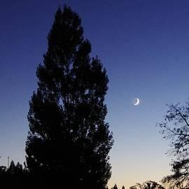 Julian Night Sky 2013 A by Phyllis Spoor