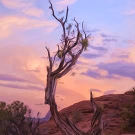 Nichon Thorstrom - Juniper Tree at Sunset