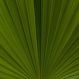 Just A Palm by Brenda Jacobs