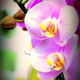 Silvie Gunawan - Just Lovely