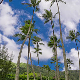 Kahana Palms by Sean Davey