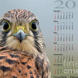 Kalender 2014 Tornfalk by Torbjorn Swenelius