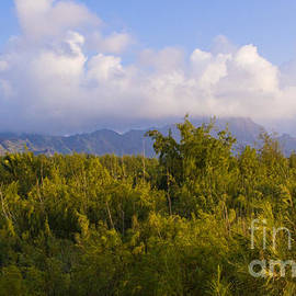 Kauai Morning by Roselynne Broussard