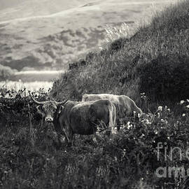 Jacque The Muse Photography - Keeping Watch in the Valley