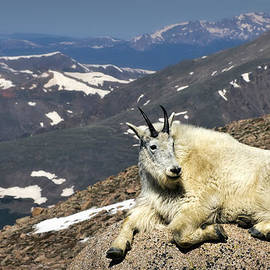 King of Mt. Evans by Priscilla Burgers