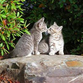 Kissing Kittens by Bruce Brandli