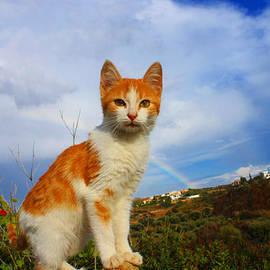 Kitten And Rainbow by Augusta Stylianou