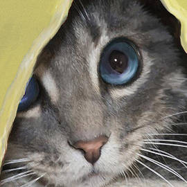 Jane Schnetlage - Kitten In Yellow Blanket