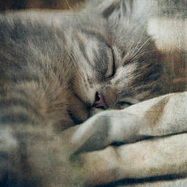 Kitten's Sweet Dream #01 by Loriental Photography