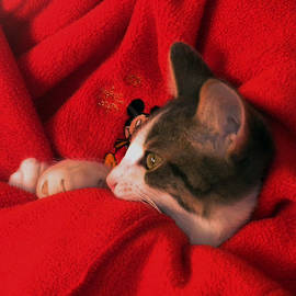 Thomas Woolworth - Kitty snuggled up with Mr Mouse
