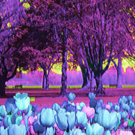 Kiwi Sky With Tulips by Ann Johndro-Collins