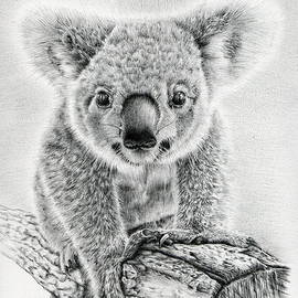 Koala Oxley Twinkles by Casey 'Remrov' Vormer