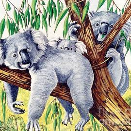 Bob Patterson - Koalas Family at Rest