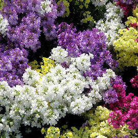 Jean Hall - Many Colors Make a Beautiful Garden