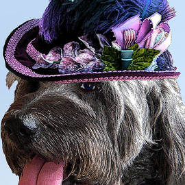 Labradoodle Trudy To The Derby by Michele Avanti