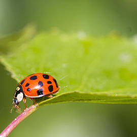 Chris Smith - Ladybird - 3