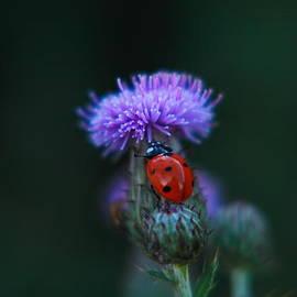 Ladybug by Jeff Swan
