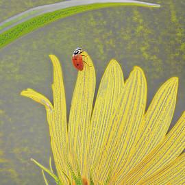 Ladybug WOWC by Kevin Anderson
