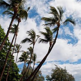 Lahaina Palms by Paulette B Wright