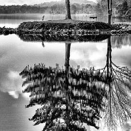 Lake Tree by Paul W Faust -  Impressions of Light