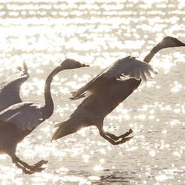 Landing by Inge Riis McDonald