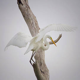 Landing by Kim Hojnacki