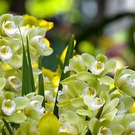 Language of Orchids by Sonali Gangane