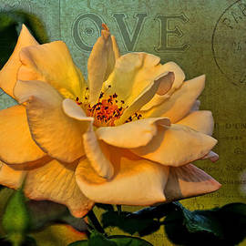 Language of The Heart - Rose by HH Photography of Florida