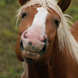 Stanza Widen - Laughing Smiling Happy Horse