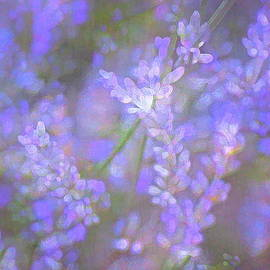 Lavender 5 by Pamela Cooper