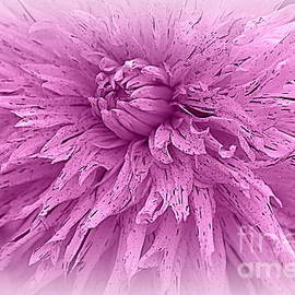 Lavender Beauty - Dahlia by Dora Sofia Caputo Photographic Design and Fine Art